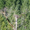 Ospreys_finallty_ospreys_096