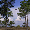 Osprey_platfrom_ft_pickens_3-14-12-33_(53)