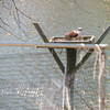 Osprey_(f)_3-2014_(5)