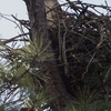 Nest_w_osprey_tr_point_
