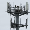 Osprey_springhill_cell_tower_005