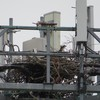 Osprey_springhill_cell_tower_011