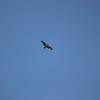 Osprey_nest_i_64_w_5