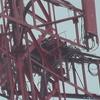Osprey_nest