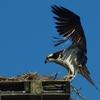 Nest_landing
