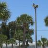 Img_3263_osprey_nest__5063