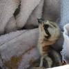 Baby_osprey2