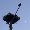 Hazen_rd_nest_with_moon_7_55_pm_2014_06_02