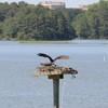 Osprey_jett_2014_005