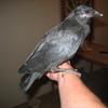 Bird051709_001