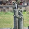 Osprey_banding_lynnhaven_06182014_115