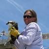 Osprey_banding_lynnhaven_06182014_150