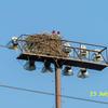 Nest_2300-1a
