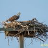 Nest_2302-1a