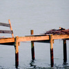 Pier-nest_3727