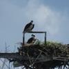 Nest_3