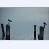 Nest_307_2048_tall