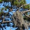 Nest-579-longview