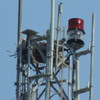 5753-ospreynest-comm_tower_near_113arrowrd