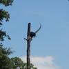 2544-goodrich_osprey_nest_dscn0447