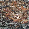Nest_close-up_edited-1
