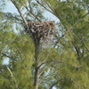 Bird_on_nest