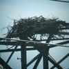 Osprey_nests_3-27-2012_015