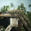 Osprey_nests_3-27-2012_028