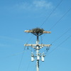 Osprey_nests_3-27-2012_043