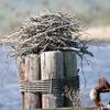 Nest_3721-01