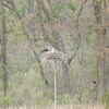 March_2012_osprey-winchester_creek_002