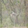 March_2012_osprey-winchester_creek_002