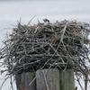 Nest___3721