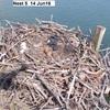 Nest_5__14_jun16