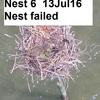 Nest_6_13jul16