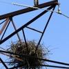 Delaware_drive_nest
