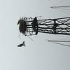 Ospreys_on_plattform_