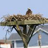 7-17-17-mandalay-nest2-1