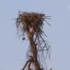 Nest_6893