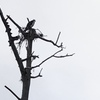 Nest_6079