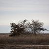 Natural_osprey_nest_forsythe_nwr_-_brigantine_-_wildlife_drive