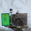 Nest_0490-03