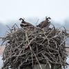 Nest_3721-03