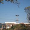 3rd_osprey_nest
