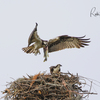 Nest_6983_mom's_turn_to_eat_in_peace_2_04022018