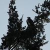 2018-april_osprey_shell_cottage_04