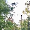 Nest_6079_4-17-18b