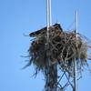 Nest_7016_4-20-18