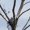 New_nest