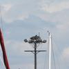 53314_osprey_nest_platform